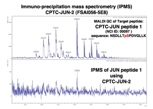 Click to enlarge image Immuno-Precipitation Mass Spectrometry using CPTC-JUN-2 antibody with CPTC-JUN proto-Oncogene peptide 1 (phosphorylated) as the target antigen.
