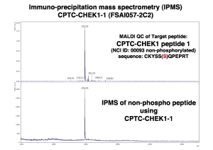 Click to enlarge image Immuno-Precipitation Mass Spectrometry using CPTC-CHEK1-1 antibody with CPTC-CHEK1 peptide 1 (NCI 00093; non-phosphorylated) as the target antigen.