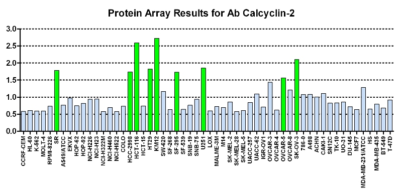 Click to enlarge image Protein Array in which CPTC-Calcyclin-2 is screened against the NCI60 cell line panel for expression. Data is normalized to a mean signal of 1.0 and standard deviation of 0.5. Color conveys over-expression level (green), basal level (blue), under-expression level (red).