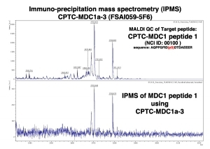 Click to enlarge image Immuno-Precipitation Mass Spectrometry using CPTC-MDC1-3 antibody with CPTC-MDC1 peptide 1 (non-phosphorylated) as the target antigen.