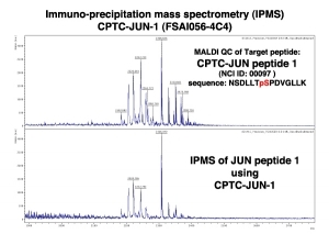 Click to enlarge image Immuno-Precipitation Mass Spectrometry using CPTC-JUN-1 antibody with CPTC-JUN proto-Oncogene peptide 1 (non-phosphorylated) as the target antigen.