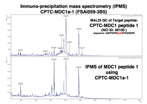 Click to enlarge image Immuno-Precipitation Mass Spectrometry using CPTC-MDC1-1 antibody with CPTC-MDC1 peptide 1 (phosphorylated) as the target antigen.