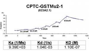 Click to enlarge image Kinetic titration data for GSTMu2-1 Ab (623A2.1) using Biacore SPR method
