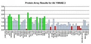 Click to enlarge image Protein Array in which CPTC-YWHAE-3 is screened against the NCI60 cell line panel for expression. Data is normalized to a mean signal of 1.0 and standard deviation of 0.5. Color conveys over-expression level (green), basal level (blue), under-expression level (red).