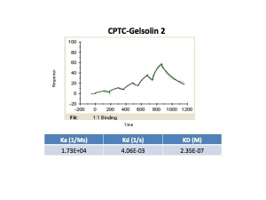 Click to enlarge image Kinetic titration data for Gelsolin-2 using Biacore SPR method
