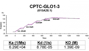 Click to enlarge image Kinetic titration data for GLO1-3 Ab (615A28.1) using Biacore SPR method