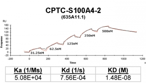 Click to enlarge image Kinetic titration data for S100A4-2 Ab (635A11.1) using Biacore SPR method
