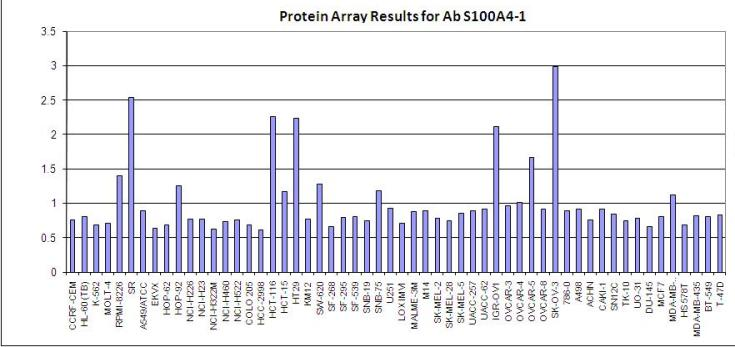 Click to enlarge image Protein Array in which S100A4-1 is screen agains the NCI60 cell line panel for expression. Data is normalized to a mean signal of 1.0 and standard deviation of 0.5.