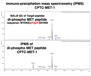 Click to enlarge image Immuno-Precipitation Mass Spectrometry using CPTC-MET-1 antibody with di-phospho MET peptide as the target antigen (sequence: MYDKE(pY)(pY)SVHNK)