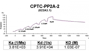 Click to enlarge image Kinetic titration data for PP2A-2 Ab (622A3.1) using Biacore SPR method