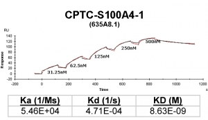 Click to enlarge image Kinetic titration data for S100A4-1 Ab (635A8.1) using Biacore SPR method