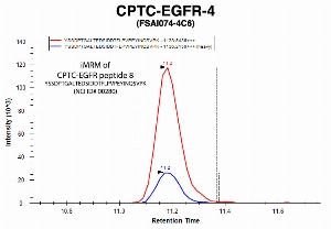 Click to enlarge image Immuno-MRM chromatogram of CPTC-EGFR-4 antibody with CPTC-EGFR peptide 8 (NCI ID#00280) as target