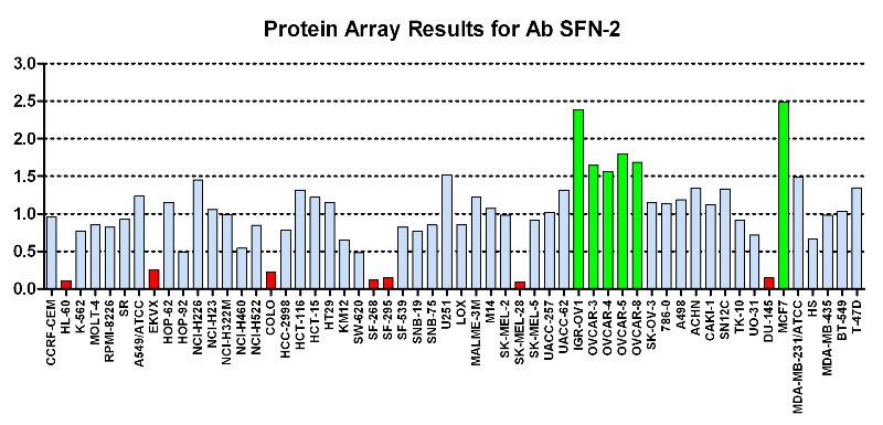 Click to enlarge image Protein Array in which CPTC-SFN-2 is screened against the NCI60 cell line panel for expression. Data is normalized to a mean signal of 1.0 and standard deviation of 0.5. Color conveys over-expression level (green), basal level (blue), under-expression level (red).