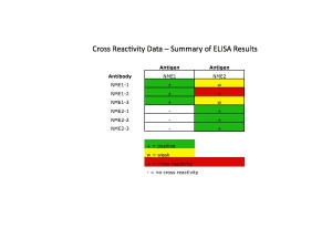 Click to enlarge image This table shows the cross reactivity data for NME1 and NME2.