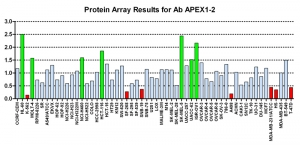 Click to enlarge image Protein Array in which CPTC-APEX1-2 is screened against the NCI60 cell line panel for expression. Data is normalized to a mean signal of 1.0 and standard deviation of 0.5. Color conveys over-expression level (green), basal level (blue), under-expression level (red).