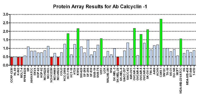 Click to enlarge image Protein Array in which CPTC-Calcylin is screened against the NCI60 cell line panel for expression. Data is normalized to a mean signal of 1.0 and standard deviation of 0.5. Color conveys over-expression level (green), basal level (blue), under-expression level (red).