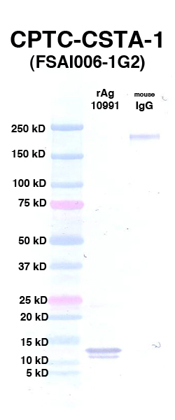 Click to enlarge image Western Blot using CPTC-CSTA-1 as primary Ab against rAg 10991 (CSTA) (lane 2). Also included are molecular wt. standards (lane 1) and mouse IgG as control for goat anti-mouse HRP secondary binding (lane 3).