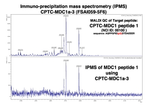 Click to enlarge image Immuno-Precipitation Mass Spectrometry using CPTC-MDC1-3 antibody with CPTC-MDC1 peptide 1 (phosphorylated) as the target antigen.