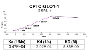 Click to enlarge image Kinetic titration data for GLO1-1 Ab (615A3.1) using Biacore SPR method