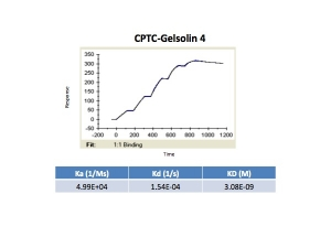Click to enlarge image Kinetic titration data for Gelsolin-4 antibody using Biacore SPR method