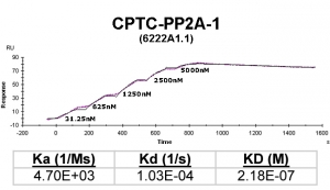 Click to enlarge image Kinetic titration data for PP2A-1 Ab (622A1.1) using Biacore SPR method