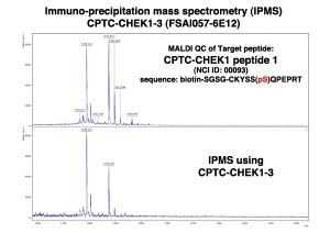 Click to enlarge image Immuno-Precipitation Mass Spectrometry using CPTC-CHEK1-3 antibody with CPTC-CHEK1 peptide 1 (NCI 00093; phosphorylated) as the target antigen.