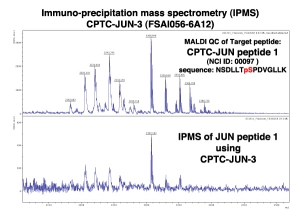 Click to enlarge image Immuno-Precipitation Mass Spectrometry using CPTC-JUN-3 antibody with CPTC-JUN proto-Oncogene peptide 1 (phosphorylated) as the target antigen.