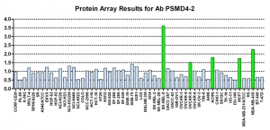 Click to enlarge image Protein Array in which CPTC-PSMD4-2 is screened against the NCI60 cell line panel for expression. Data is normalized to a mean signal of 1.0 and standard deviation of 0.5. Color conveys over-expression level (green), basal level (blue), under-expression level (red).
