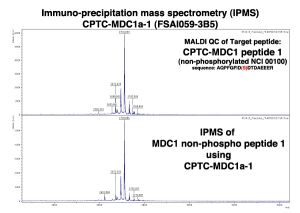Click to enlarge image Immuno-Precipitation Mass Spectrometry using CPTC-MDC1-1 antibody with CPTC-MDC1 peptide 1 (non-phosphorylated) as the target antigen.