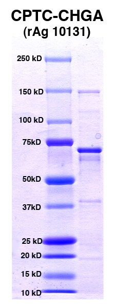 Click to enlarge image PAGE of Ag 10131 (with molecular weight standards in lane 1)