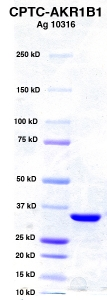 Click to enlarge image PAGE of Ag 10316 with molecular weight standards
